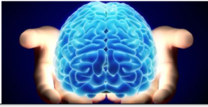 Stock-foto af en hjerne i hænder